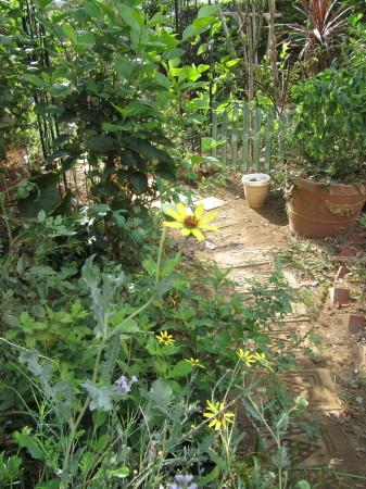 ガーデンチョコレートIMG_0001