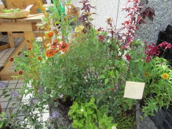 植物自由区IMG_0001