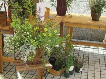 植物自由区IMG_0001_1