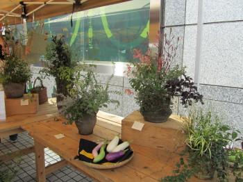 植物自由区3IMG_0001