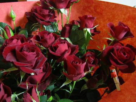 薔薇0001