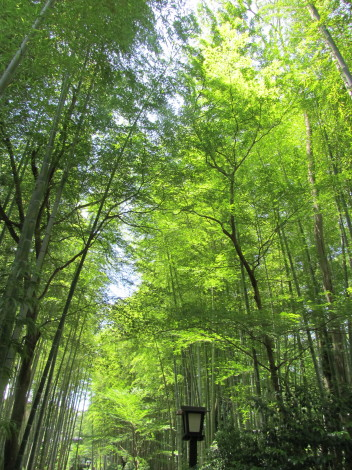 竹の小道0001