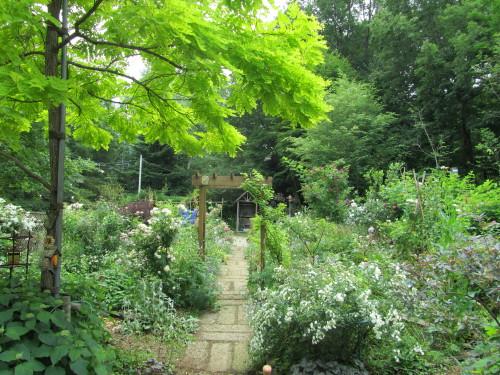 庭の様子IMG_0001_7
