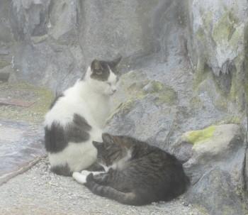 猫0001_2