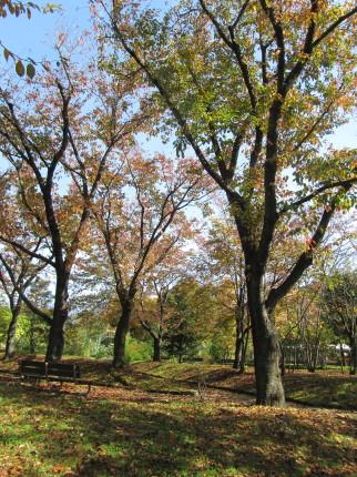 一本木公園0001_1