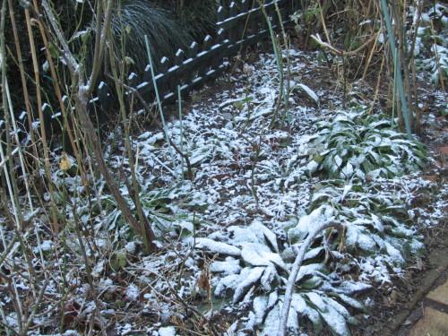 雪0001_1