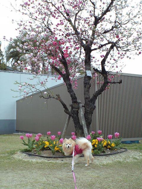 CA3A0531-2012-04-17.jpg