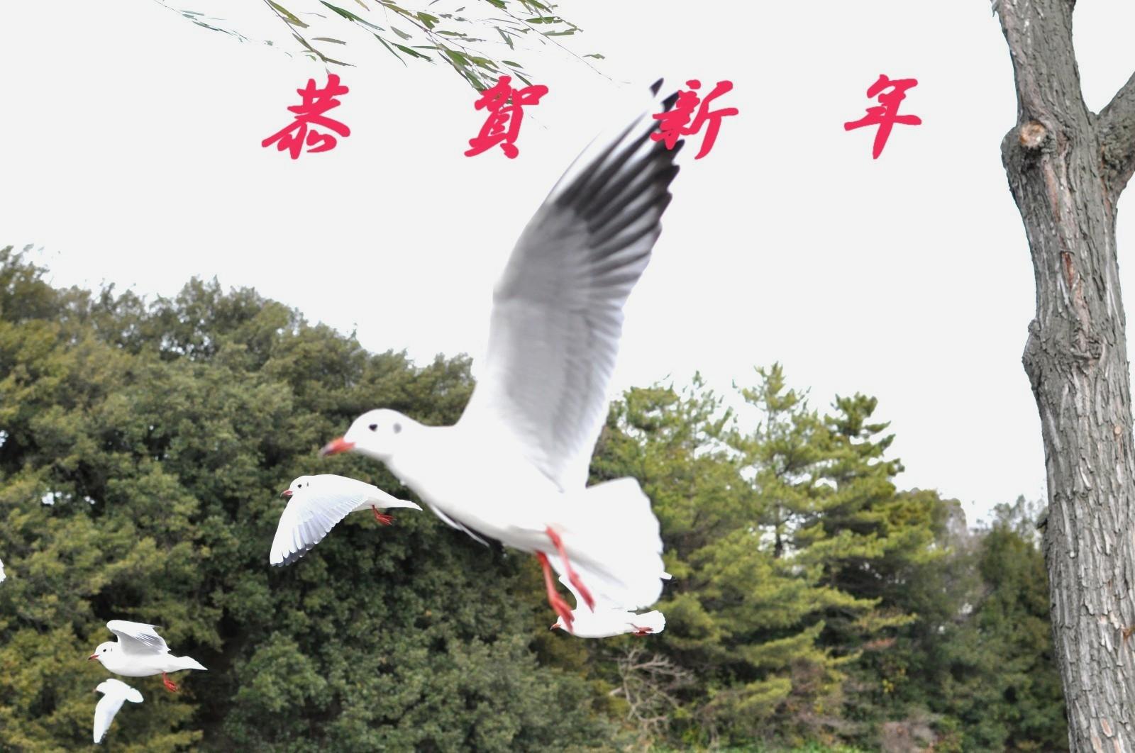 besutokannsei_20110104060612.jpg