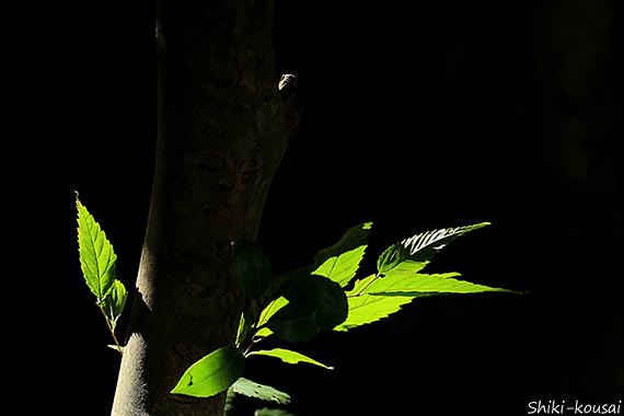 木肌と透過光