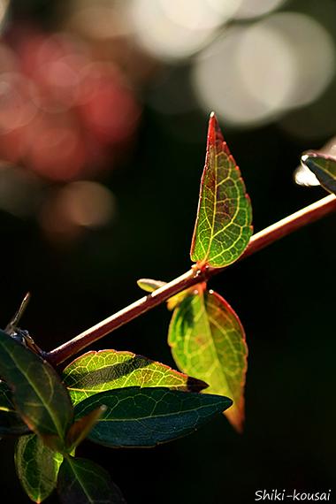 日が当たっていない葉っぱ