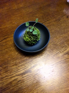 苔玉皿の上