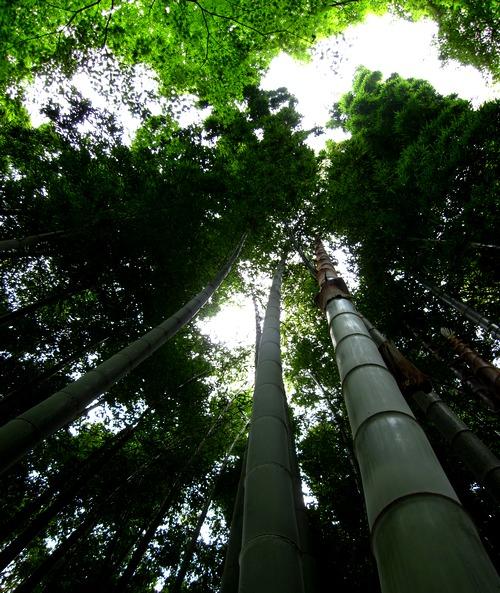 殿ヶ谷の竹