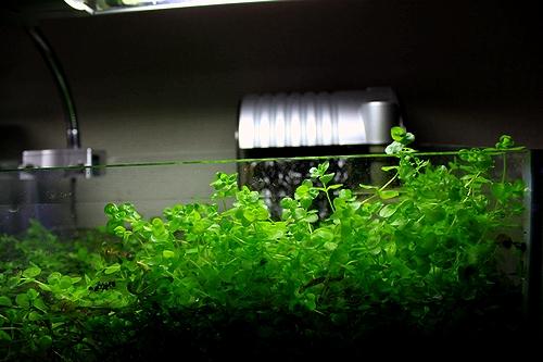 ラージパール水上3