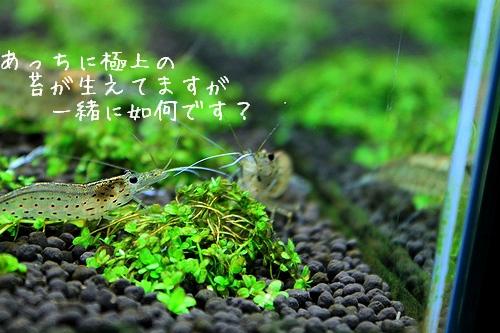 片目ヤマト4