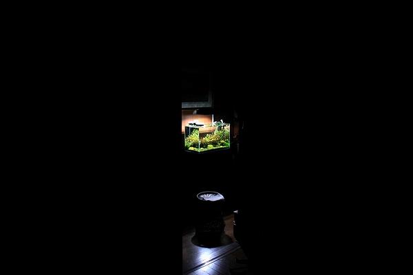 夜に水槽を眺める場所1