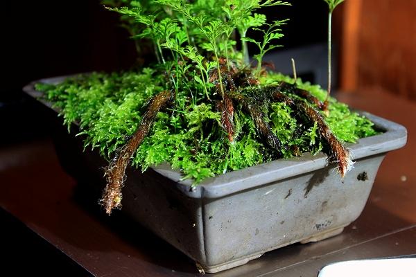 苔の様子1