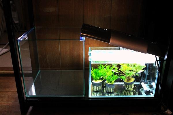 小型水槽と水草