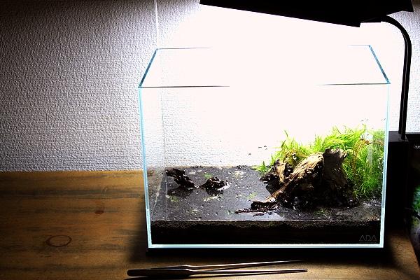 草植え込み