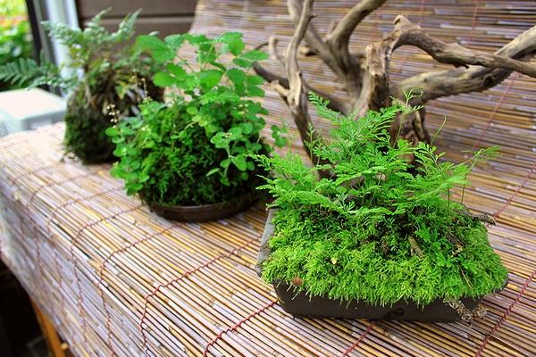苔盛り三種