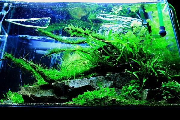 陰性水草水槽1