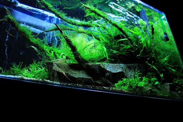 陰性水草水槽2