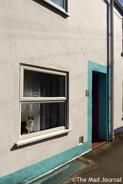 white wall and cat