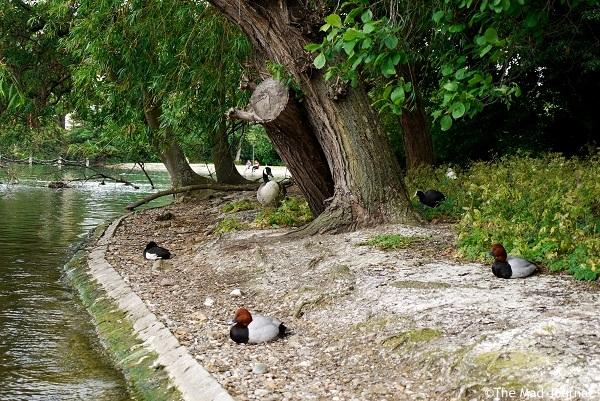 bird's island