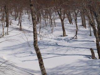 s03雪崩