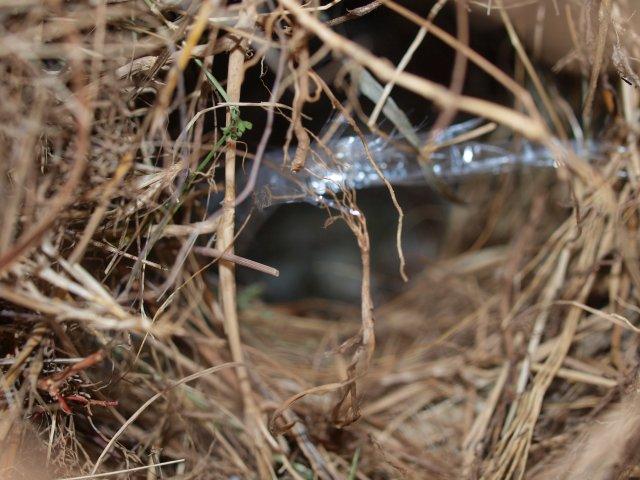 sスズメの巣2