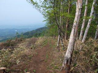 s10伐採地