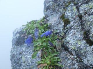 s06岩場の花