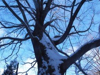 s氷玉の木2