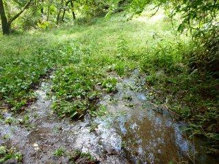 s05湿地