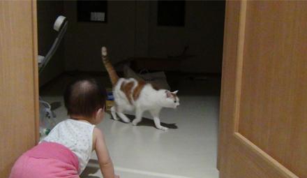 娘とアル(猫)-1