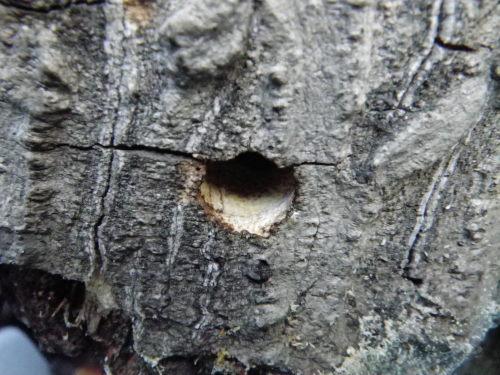熊蜂の巣穴