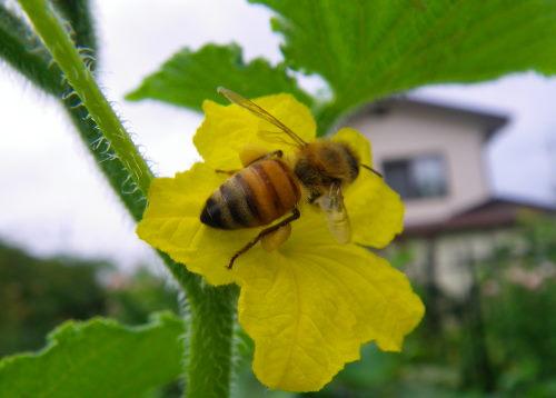 ミツバチ86