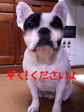 犬ごはん5