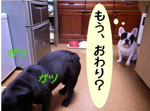 犬ごはん6