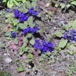 写真 濃い紫の花