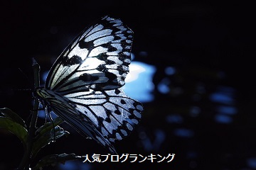 モテる女性になる為に~夜蝶に学ぶ本物の愛情~