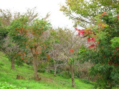 秋の吾妻山