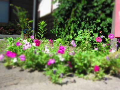 ミニチュア・ガーデン2