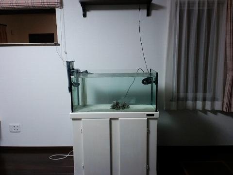 水槽引越し20110412