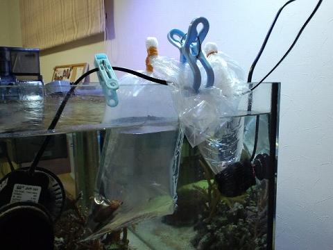 袋が浮いた20110501