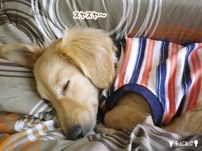 おやすみりっくん。。