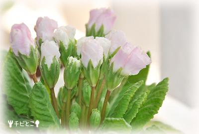 チビとこ大好きなお花よん