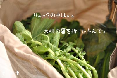 チビとこお野菜ゲット。。