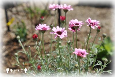 チビとこお花。。