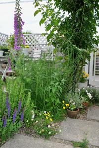 チビとこお庭。。