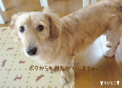 りっくん(=^△^=)